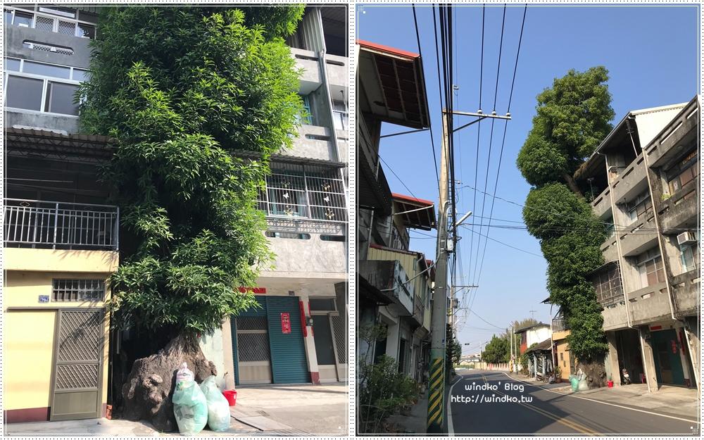 彰化二水∥ 透天厝夾縫中的300年芒果樹超壯觀_源泉村員集路/源泉火車站附近