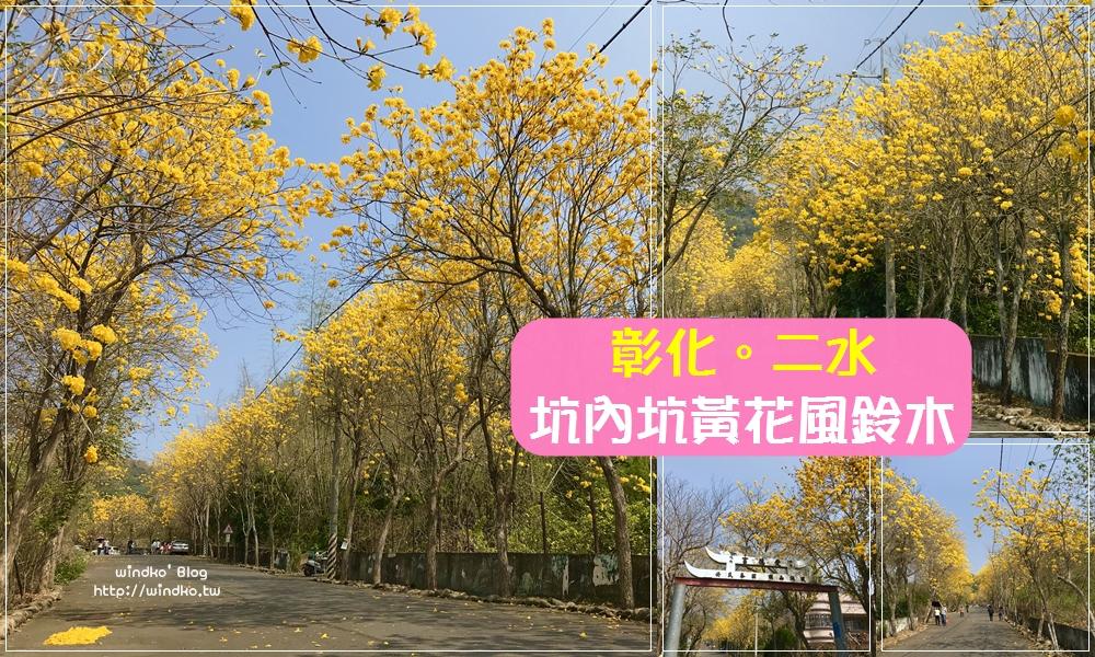 彰化黃花風鈴木景點∥ 二水 坑內坑森林步道入口的坑內風鈴木花道,盛開也是小秘境_2021年花況